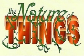 The nature of things camp